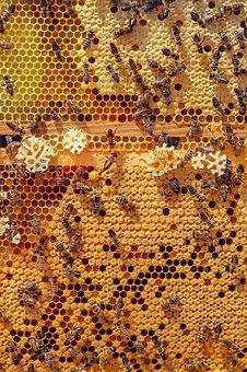 Quels sont les bienfaits du miel?